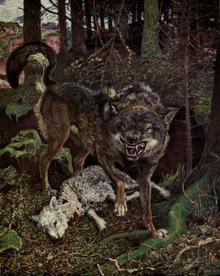 220px-Lastbritishwolf